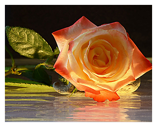 ROSA 4 300 pixels with border