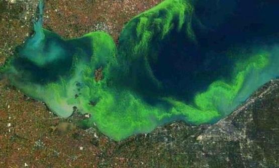 Algae Bloom in Lake Eerie