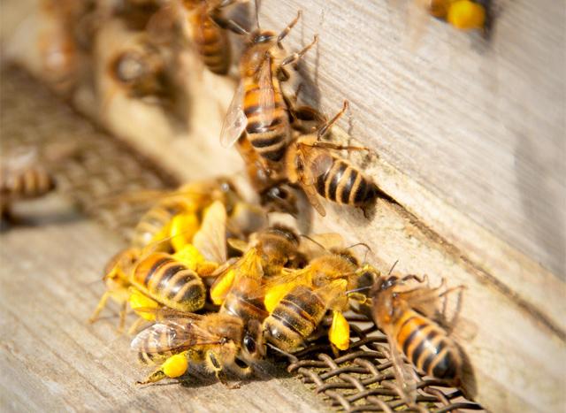 Honey bee hive (Paul Rollings / CC BY 2.0)